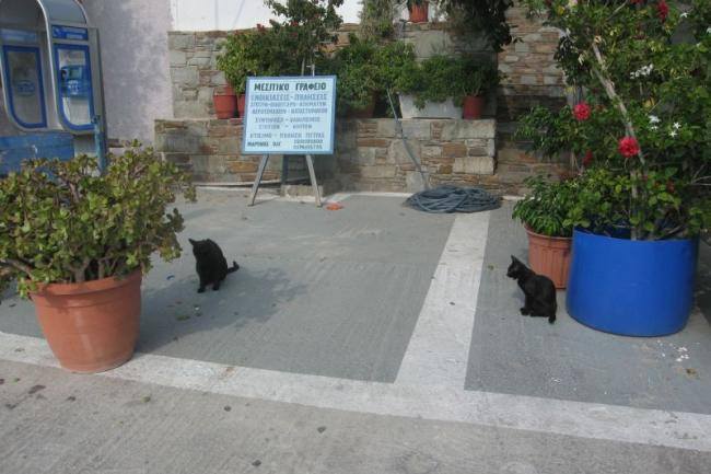 Cyclades cats